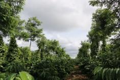 Tổng quan về nông lâm kết hợp tại Việt Nam
