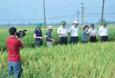 Giải pháp tổng hợp nhằm tăng số vụ gieo trồng trên đất 1 vụ vùng miền núi phía Bắc