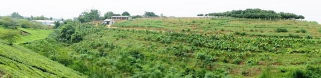 A review of the status of agroforestry in Vietnam